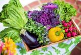 Guest Blogger Jen Miller: How to Start a Garden