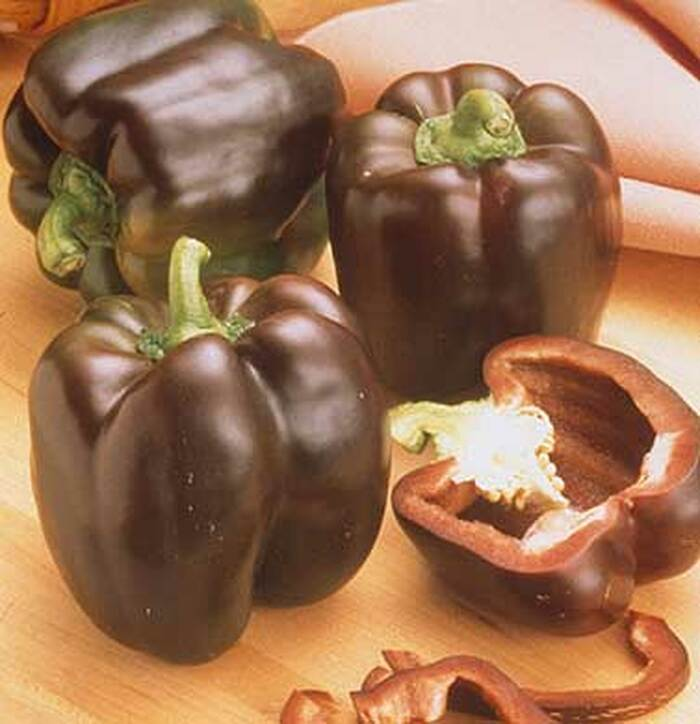 Pepper - Sweet Chocolate OG