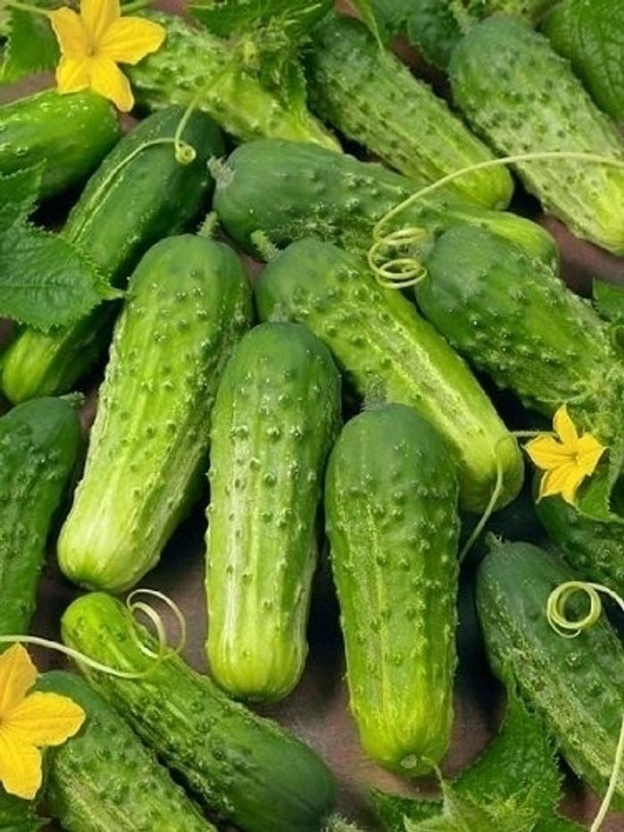 Cucumber - Tendergreen (Pickling) OG