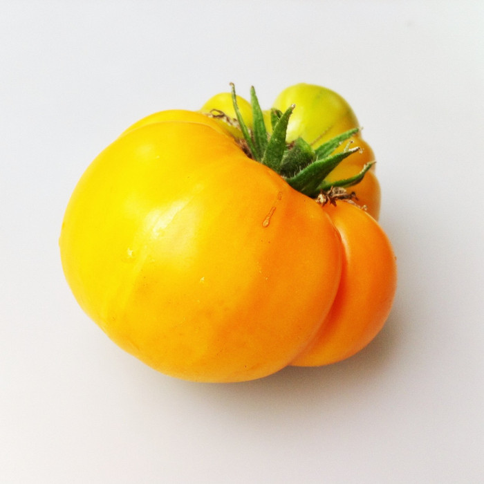Organic Yellow Brandywine Tomato from the Seattle Seed gardens.