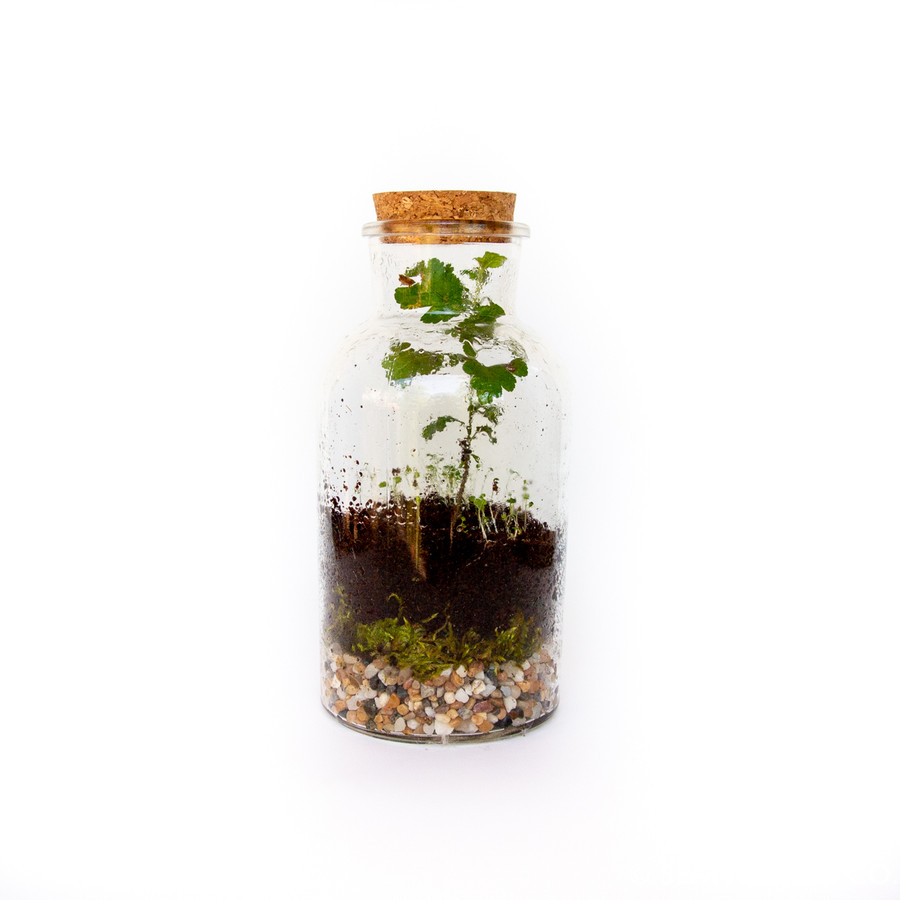 Example of a terrarium with a plant in soil.