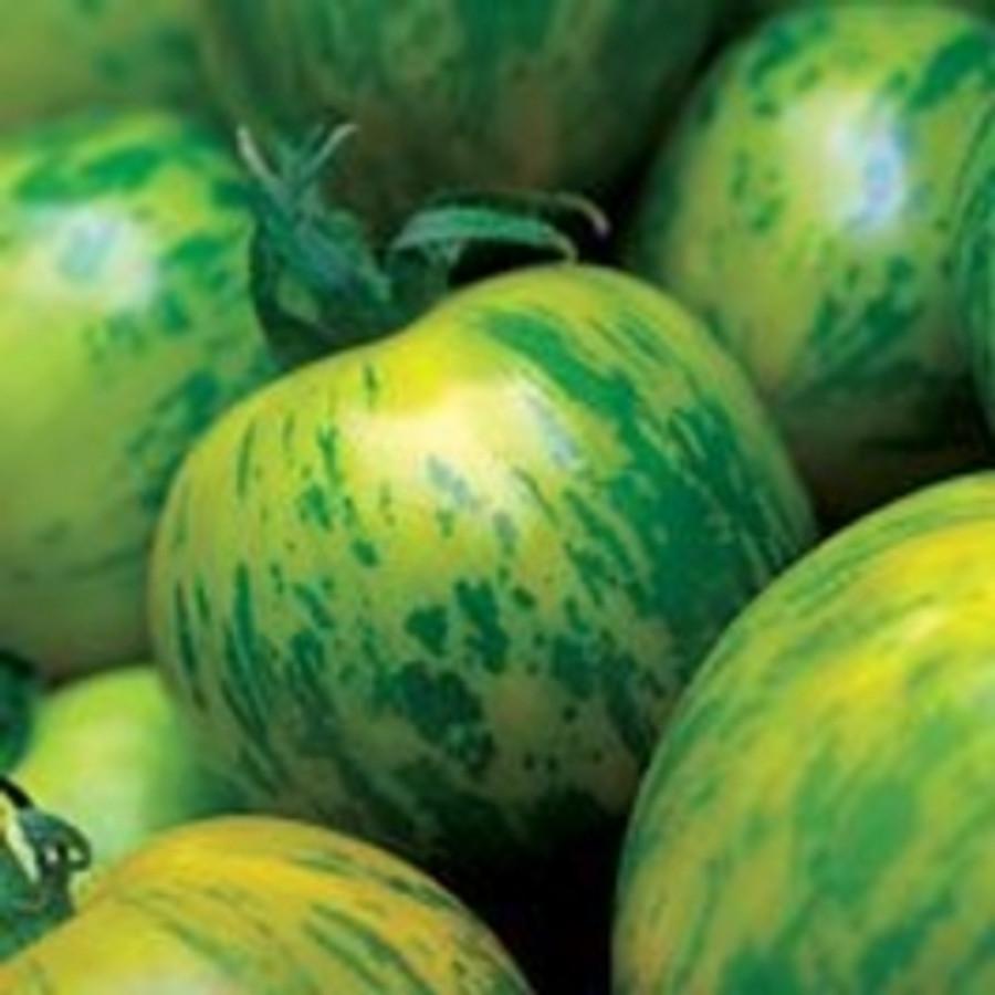 Tomato - Green Zebra OG