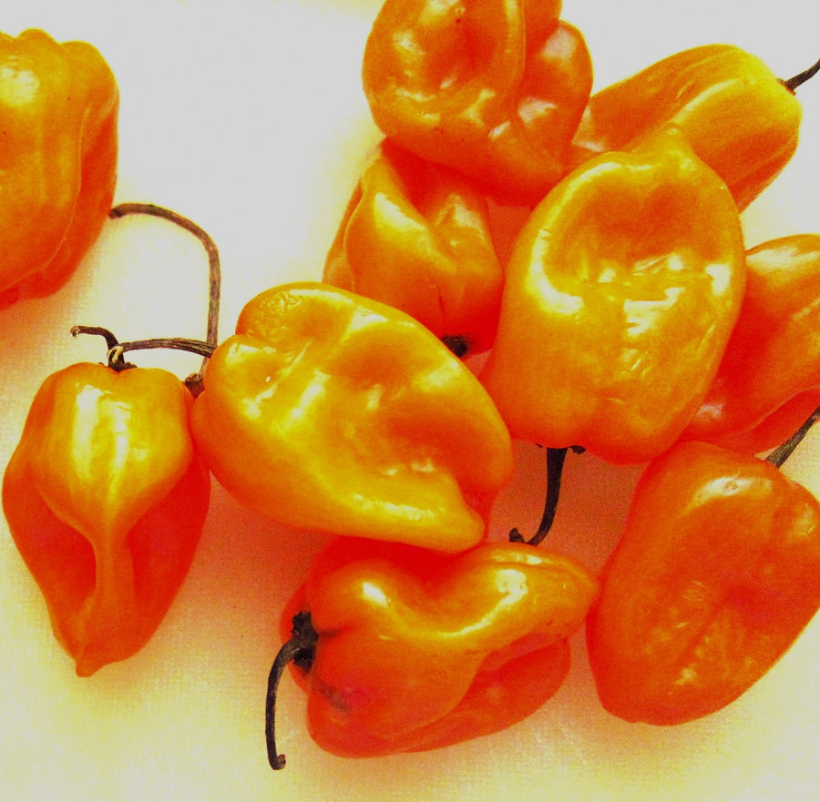 Pepper - Habanero OG