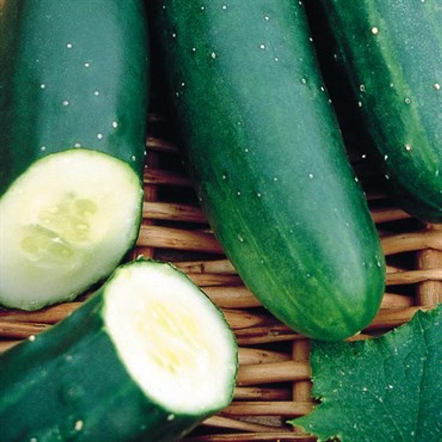 Cucumber - Sweet Marketmore OG