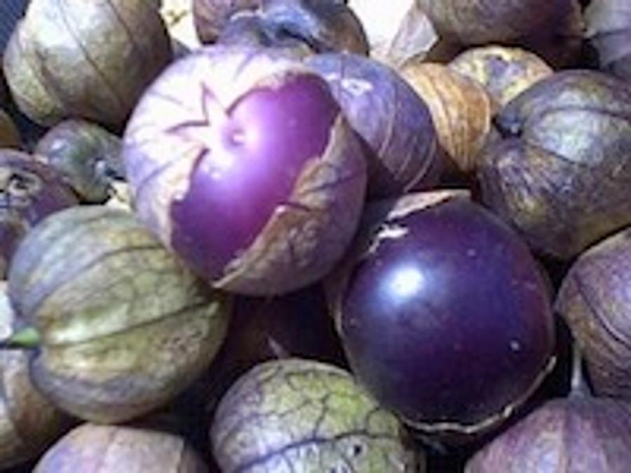 Tomatillo - Purple OG