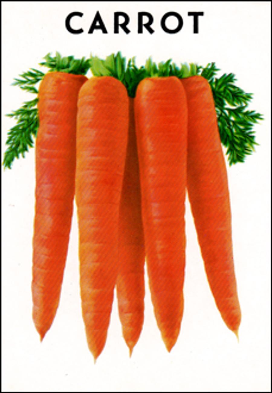 Carrots - Scarlet Nantes