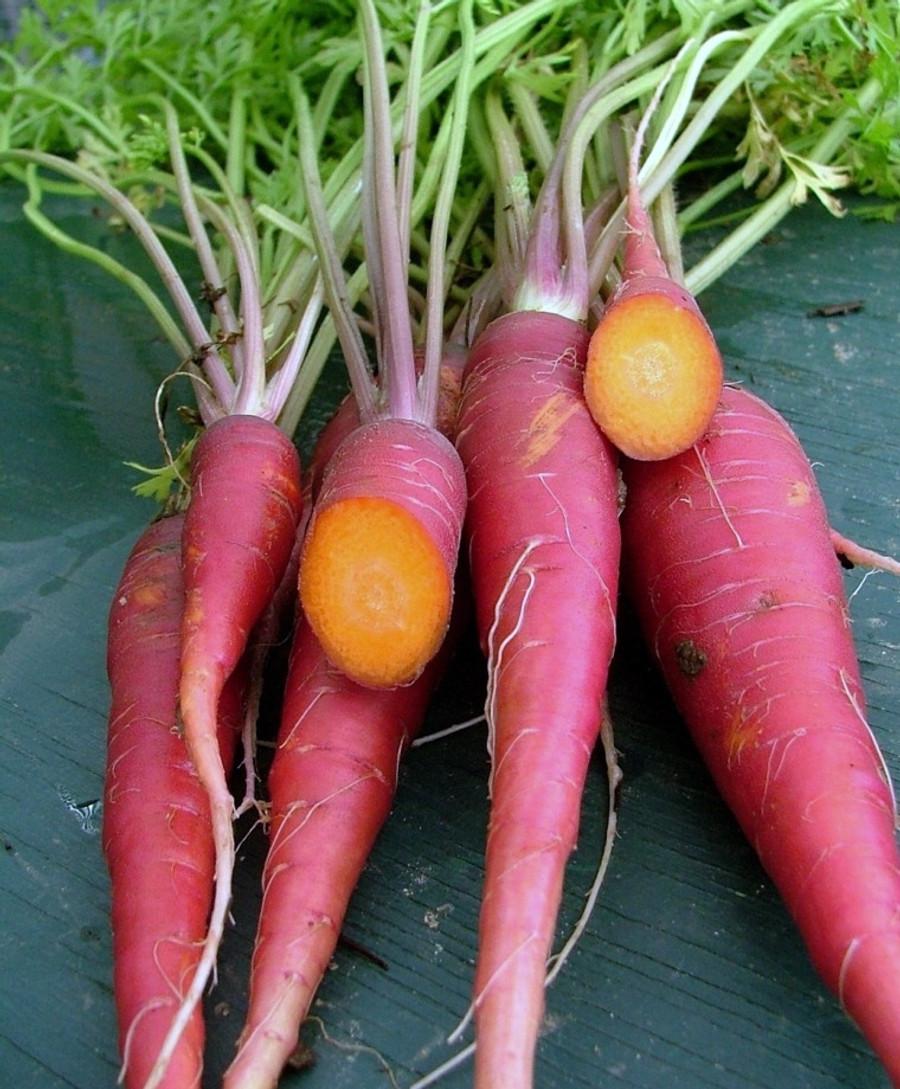 Carrot - Dragon OG