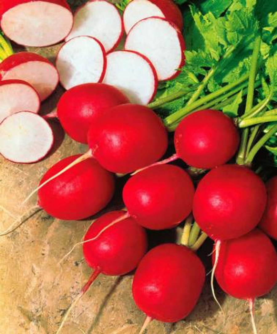 Radish - Cherry Belle OG