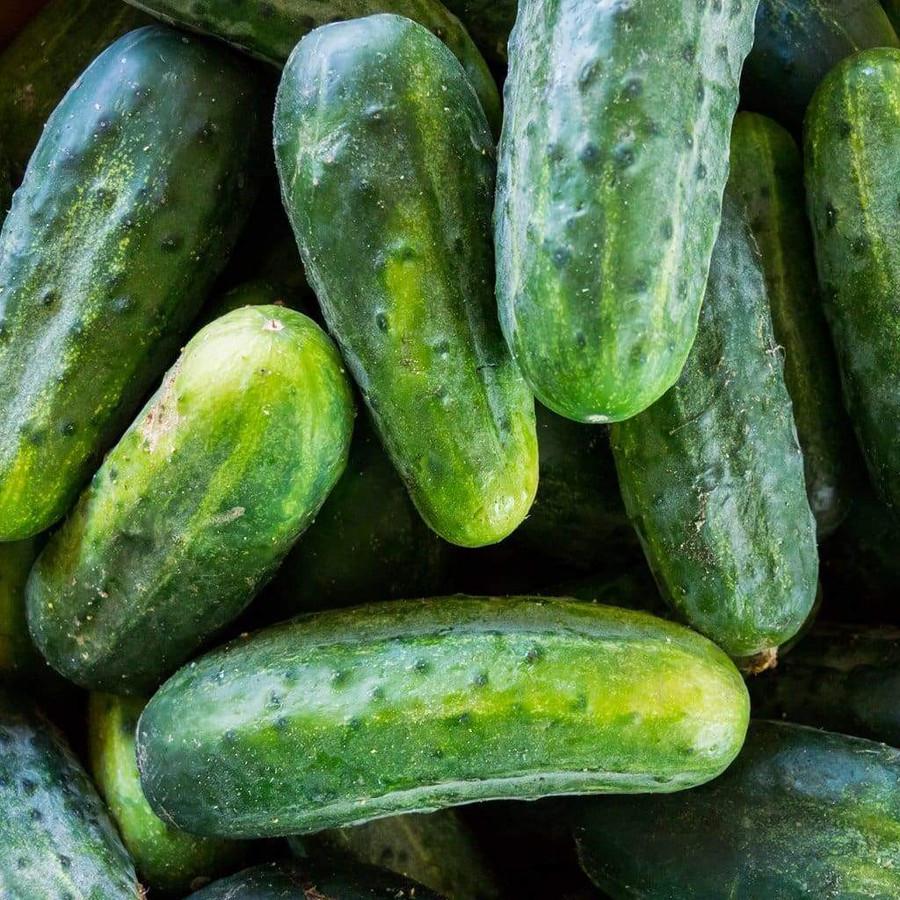 Cucumber - National Pickling OG