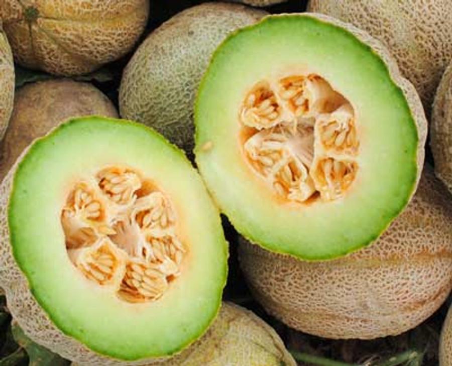 Melon - Rocky Ford OG