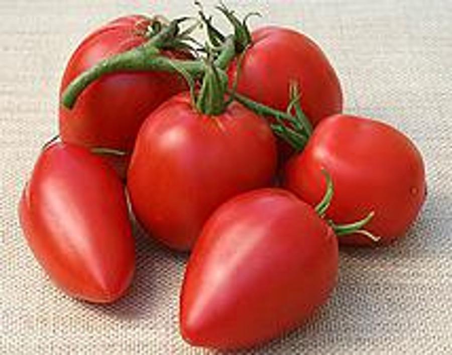 Tomato -Amish Paste OG
