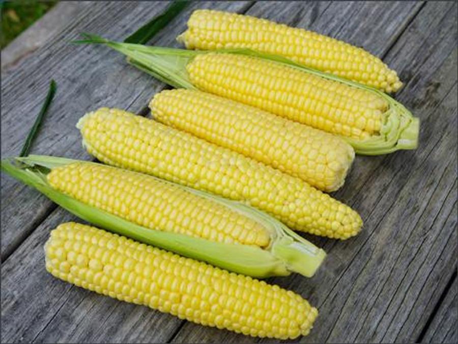 Corn - Top Hat OG Yellow Sweet