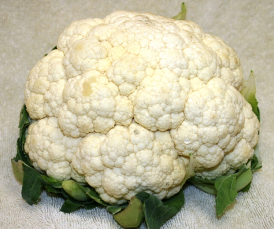 Cauliflower - Snowball Improved OG