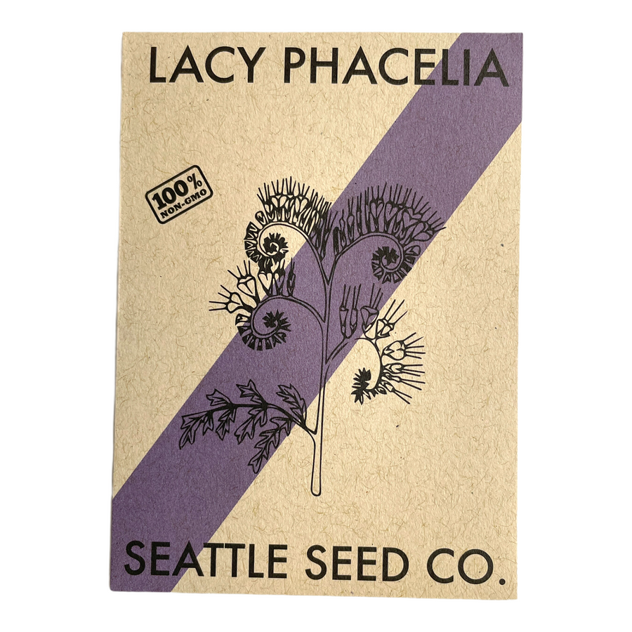 Lacy Phacelia