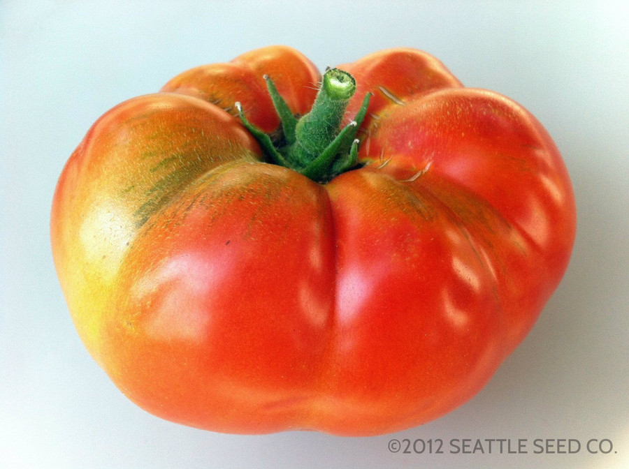 Organic Brandywine tomato from the Seattle Seed gardens.