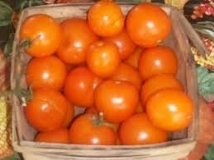 Organic Jaune Flamme Tomatoes