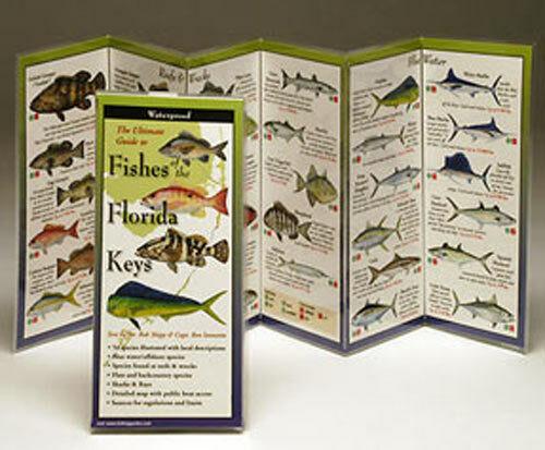 Fish Identification Charts