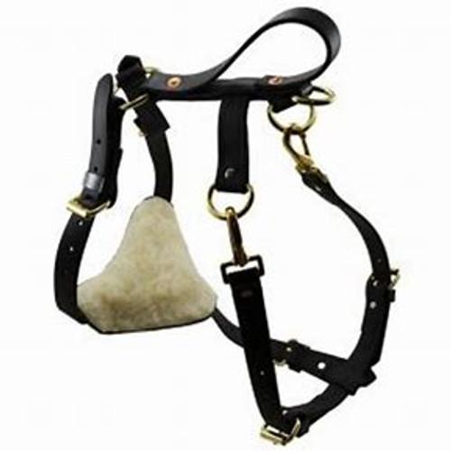 Ray Allen Biothane Multifunctional Dog Harness