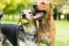 dogplaying.jpg