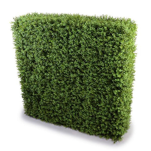 BOXWOOD HEDGE 42""