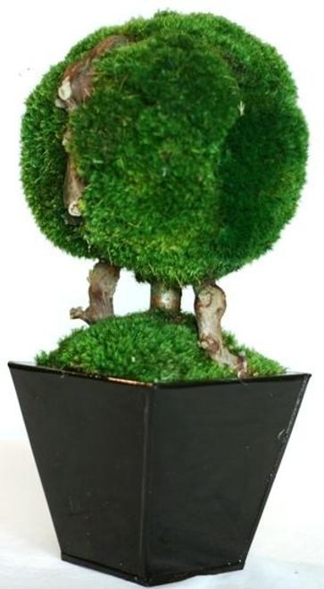 "Topiary Moss Ball Single 13"""