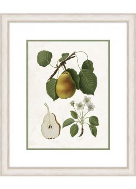 Pear Branch III