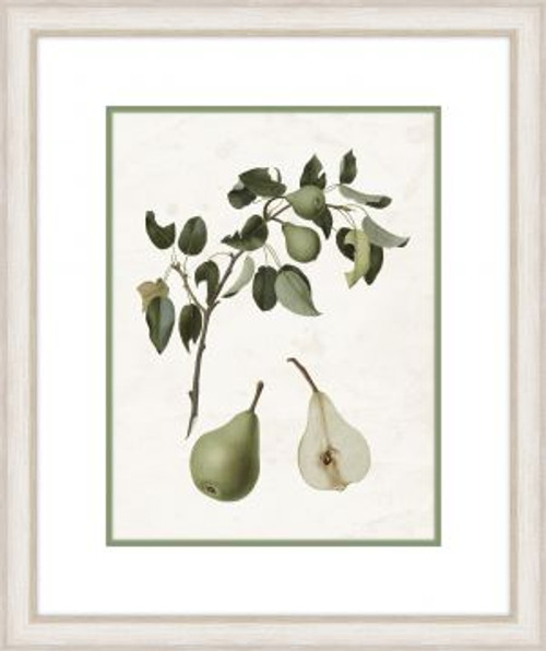 Pear Branch V