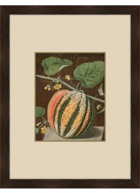 Brookshaw Melon II