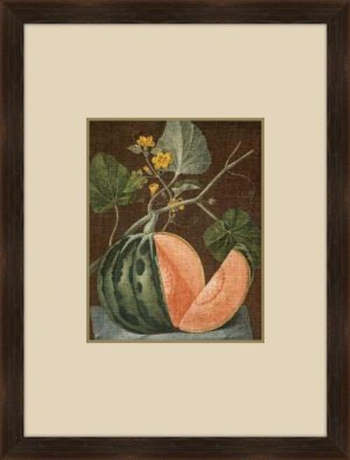 Brookshaw Melon VI