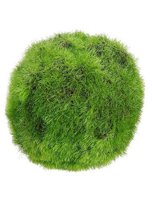"""3"""" Moss Ball  Green"""