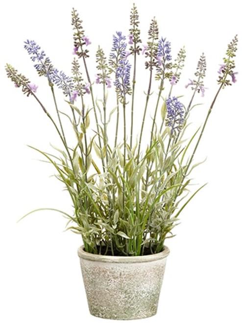 "15.5"" Lavender in Paper Mache Pot Lavender"