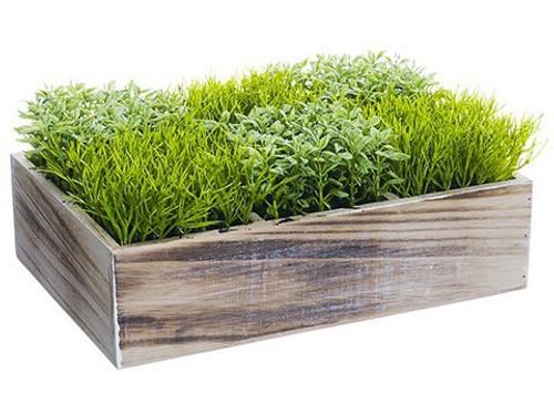 "4.5"" Grass/Tea Leaf in Wood Box Two Tone Green"