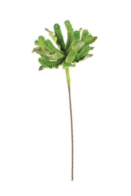 Botanica #3168