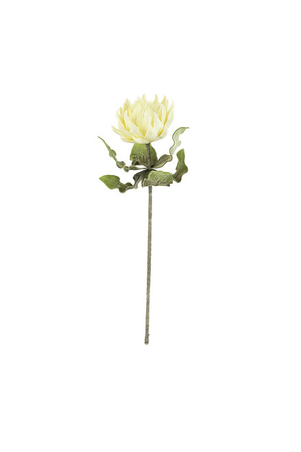 Botanica #2424