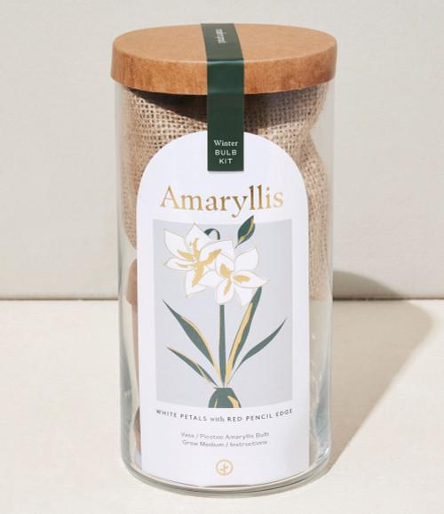 Bulb Kit, Amaryllis