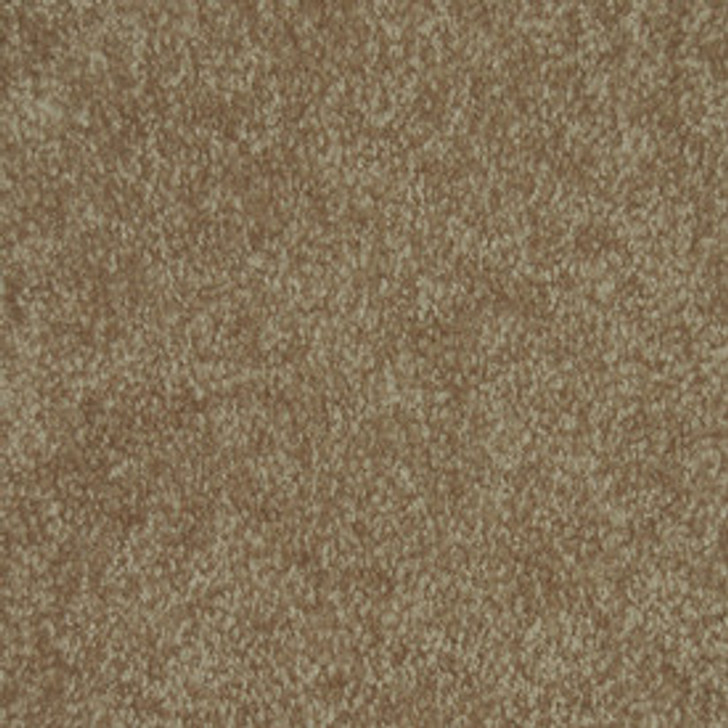 Workhorse II Textured Plush Carpet Carpet
