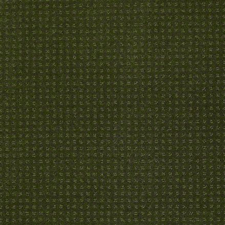 Shaw In Savannah Kelly EA024  Anso Nylon Carpet