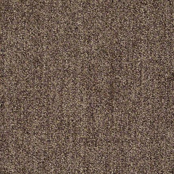 Shaw True Confidence EA597 Coffee LifeGuard Carpet