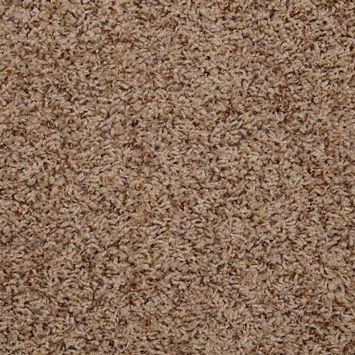 Shaw Alamar (b) Q4532 Thicket Anso Nylon Carpet