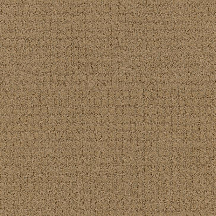 Portico 6PRC Canvas Tip-Sheared Loop  Bolyu Broadloam Commercial Carpet