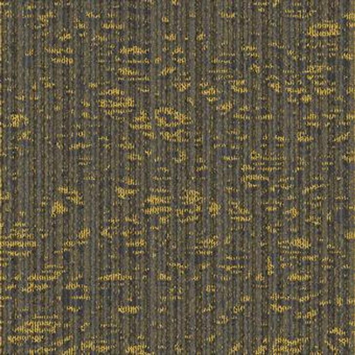 Masland Dynamic 9603 Nylon Residential Carpet