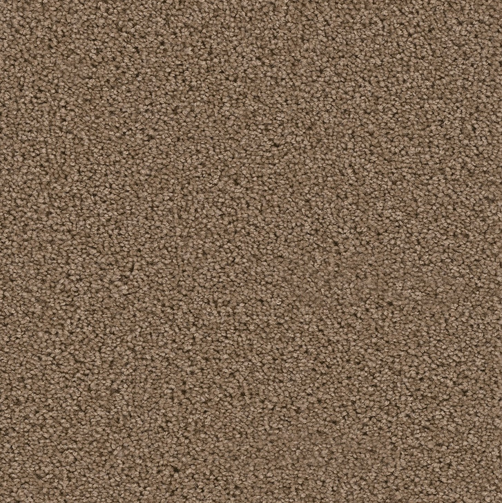 Dreamweaver Exceptional 7402 Residential Carpet