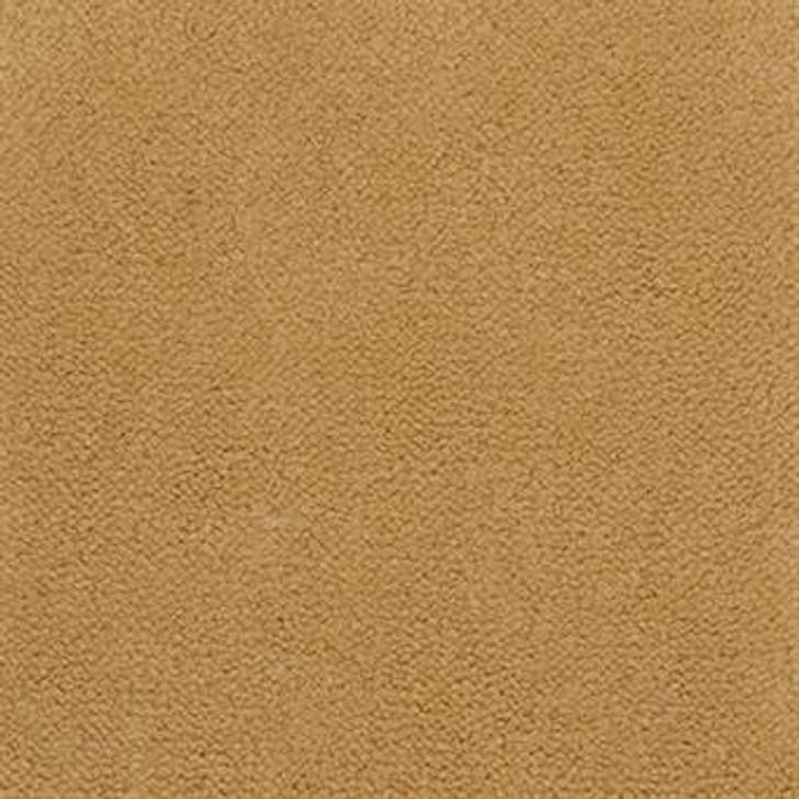 Masland Panache 9431 Nylon Residential Carpet