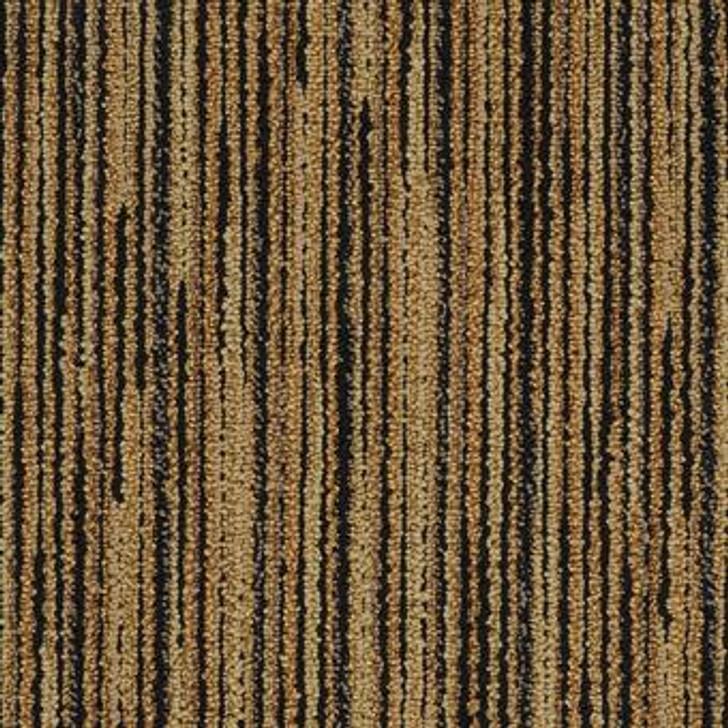 Masland Trends 9448 Nylon Residential Carpet