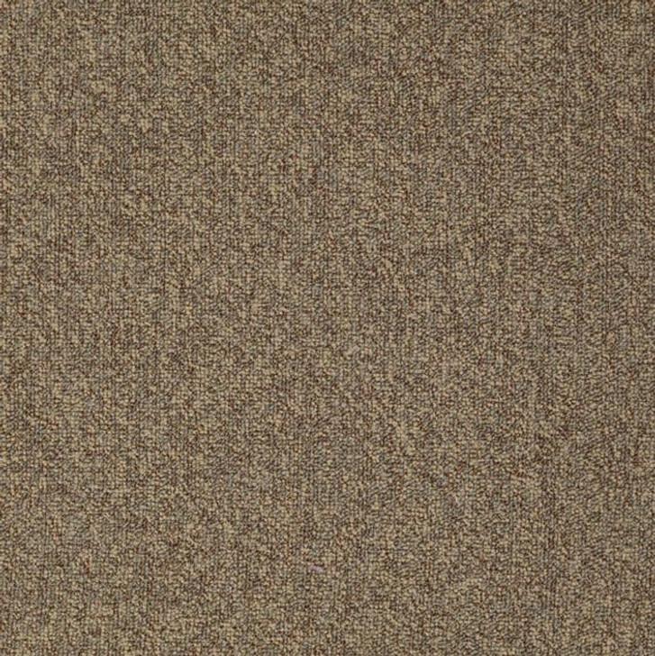 Shaw Philadelphia Scoreboard II 28 54675 Commercial Carpet