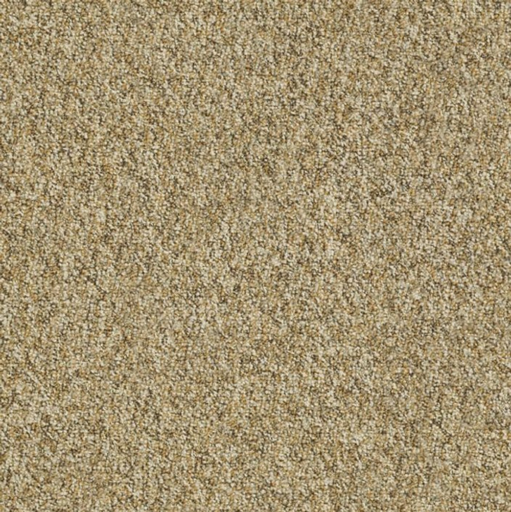 Shaw Philadelphia Franchise II 26 54745 Commercial Carpet