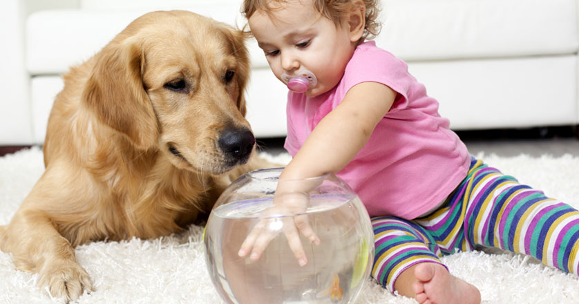 goldfish-kid-and-dog-on-carpet-georgia-carpet.jpg