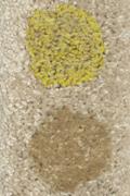 mustard-coffee-smartstrand-small.jpg