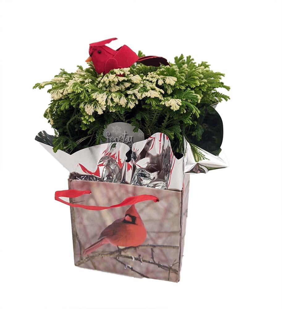 "Frosty Fern with Bird - Selaginella - Easy to Grow - 4"" Decorative Gift Box"
