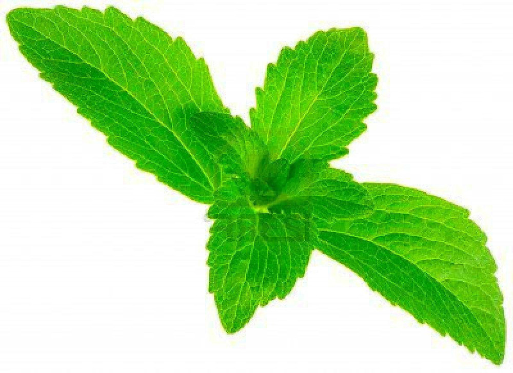 "Amazing Sugar Plant - Sweetleaf - No Calories - Stevia - 2.5"" Pot - All Organic"